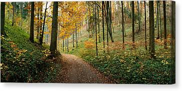 Road Passing Through A Forest Canvas Print by Panoramic Images