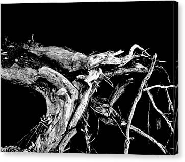 Canvas Print featuring the photograph Roots 1 by Amar Sheow