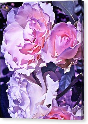 Rose 60 Canvas Print by Pamela Cooper