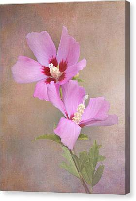Rose Of Sharon Canvas Print by Angie Vogel