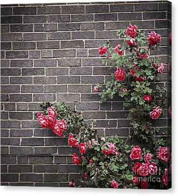 Roses On Brick Wall Canvas Print by Elena Elisseeva