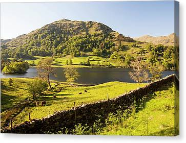 Rydal Water In Spring Canvas Print by Ashley Cooper