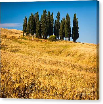 San Quirico D'orcia Canvas Print by Inge Johnsson