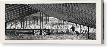 Scene At An Australian Sheep Station, Collaroy Canvas Print