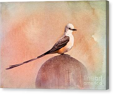 Scissor-tailed Flycatcher Canvas Print by Betty LaRue