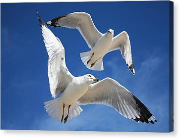 Seagulls In Love Canvas Print