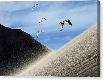 Seagulls Canvas Print by Michael Mogensen