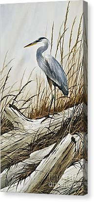 Secluded Driftwood Shore Canvas Print by James Williamson