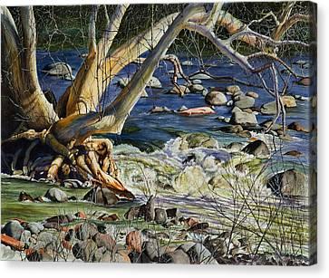 Sedona Dry Beaver Creek Sycamore Canvas Print