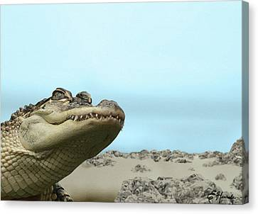 Alligator Canvas Print - See You Later Alligator by Ellen Henneke
