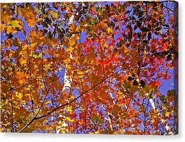 Canvas Print featuring the photograph Shades Of Fall by Dennis Bucklin