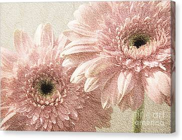 2 Silver Pink Painterly Gerber Daisies Canvas Print