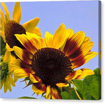Smiling Faces Canvas Print by John Harding
