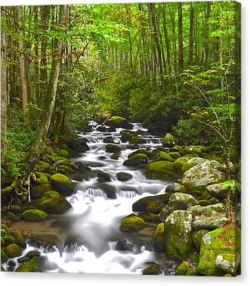 Eternal Flow Canvas Print - Smoky Mountain Stream by Frozen in Time Fine Art Photography