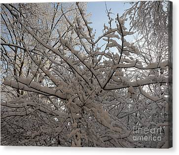 Snow Covered Tree And Sun Canvas Print
