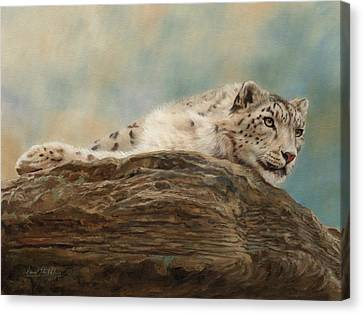 Snow Leopard Canvas Print by David Stribbling