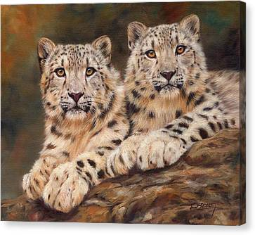 Snow Leopards Canvas Print - Snow Leopards by David Stribbling