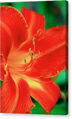 Red, Orange And Yellow Lily Canvas Print