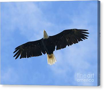 Soaring High 2 Hdr Canvas Print by Sharon Talson