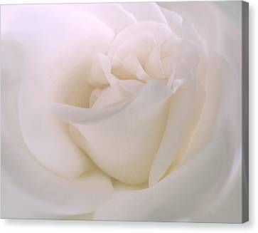 Softness Of A White Rose Flower Canvas Print