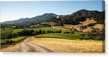 Vine Grapes Canvas Print - Sonoma Valley by Clay Townsend
