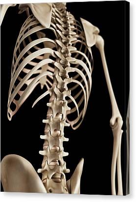 Spine Canvas Print by Sebastian Kaulitzki