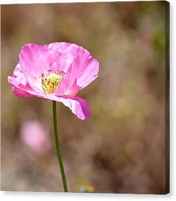 Spring Poppy Flower Canvas Print by P S