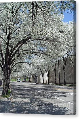 Springtime Corning Ny 3 Canvas Print