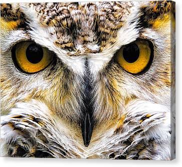 Staredown Canvas Print by David Wynia