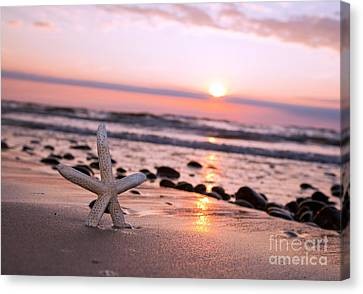 Starfish On The Beach At Sunset Canvas Print by Michal Bednarek