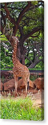 Stretching It Canvas Print by Michele Myers