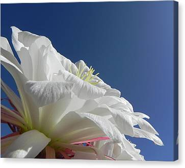 Canvas Print featuring the photograph Striking Contrast by Deb Halloran