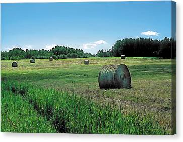 Western Canvas Print - Summer Hay 3 by Terry Reynoldson
