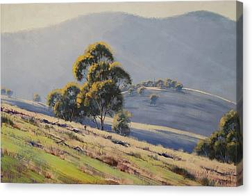 Eucalyptus Canvas Print - Summer Landscape by Graham Gercken
