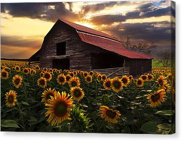 Rural Landscapes Canvas Print - Sunflower Farm by Debra and Dave Vanderlaan