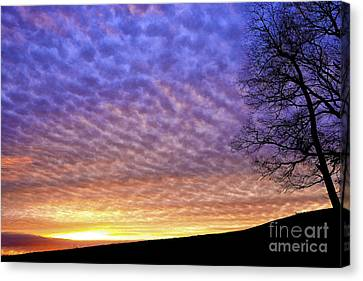Sunrise Drama Canvas Print by Thomas R Fletcher