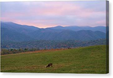 Sunrise In Cades Cove Canvas Print by Dan Sproul