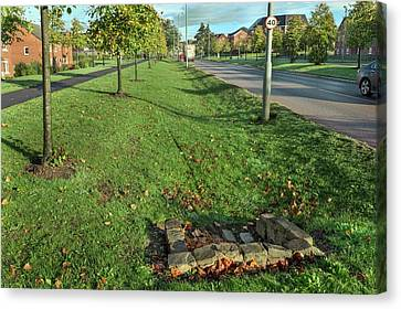 Lime Tree Canvas Print - Sustainable Urban Drainage System by Simon Booth