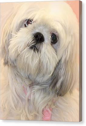 Sweet Love Canvas Print by The Art Of Marilyn Ridoutt-Greene