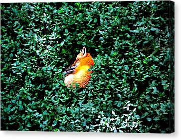 Canvas Print featuring the photograph Sweet Slumber by Deena Stoddard