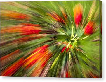 Swirl Of Red Canvas Print by Jon Glaser