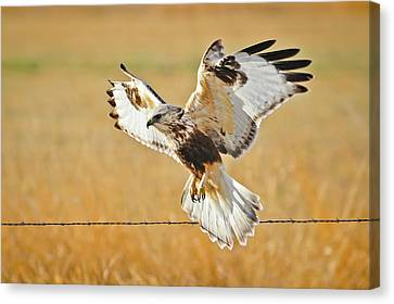 Taking Flight Canvas Print by Greg Norrell