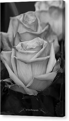 Tea Roses In Black And White Canvas Print by Jeanette C Landstrom