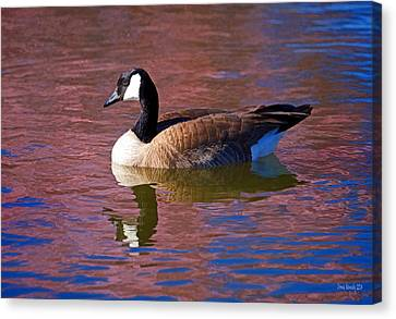 That Touch Of Pink Canvas Print by Donna Kennedy