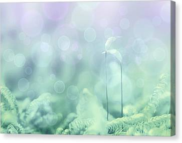 Licht Canvas Print - The Date by Heike Hultsch
