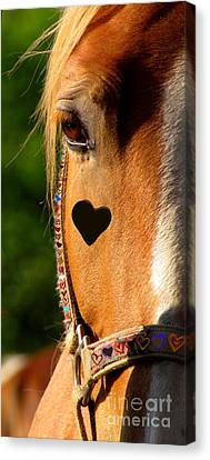 The Love Of A Horse Canvas Print by France Laliberte