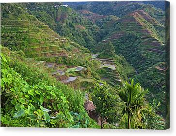 The Rice Terraces Of The Philippine Canvas Print by Keren Su