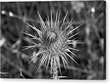 Thistle Canvas Print - Thistle Flower by George Atsametakis