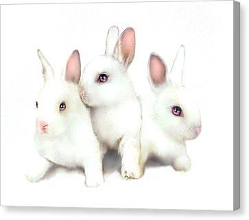 Three Bunnies Canvas Print by Robert Foster