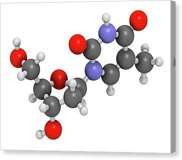 Thymidine Nucleoside Molecule Canvas Print by Molekuul